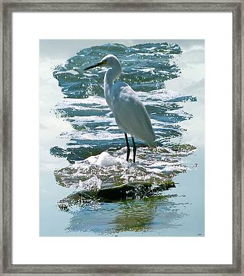 Wading In The Waves Framed Print