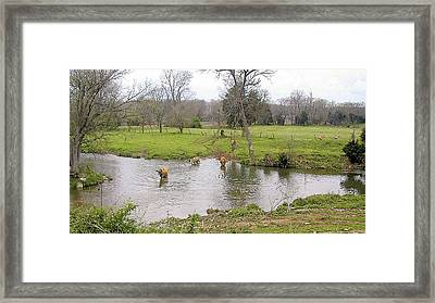 Wading Framed Print by Jan Amiss Photography