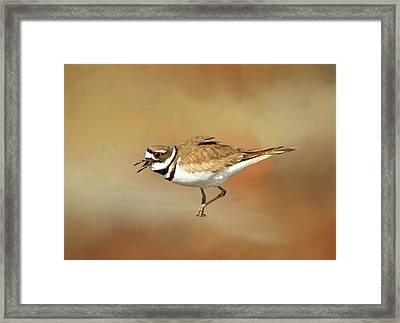 Wading Killdeer Framed Print