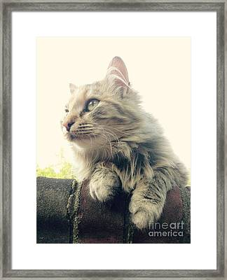 Waffles Framed Print by Mary Tron