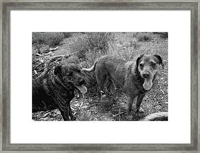 Wagging Tongues Framed Print by Donna Blackhall