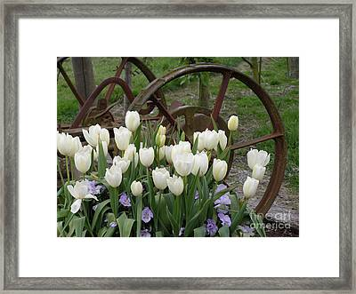 Wagon Wheel Tulips Framed Print