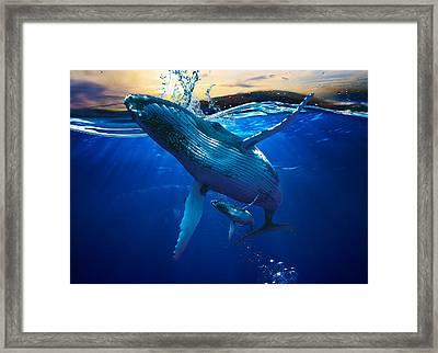 Whale Watching Art Framed Print