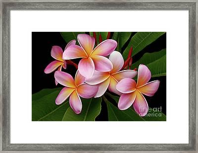 Wailua Sweet Love Texture Framed Print by Sharon Mau