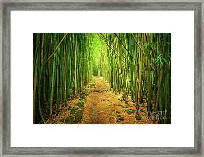 Waimoku Bamboo Forest Framed Print by Inge Johnsson