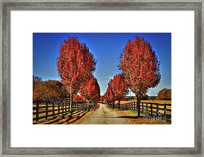 Wait Until We Are Full Grown Framed Print by Reid Callaway