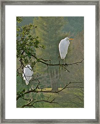 Waiting Egrets Framed Print
