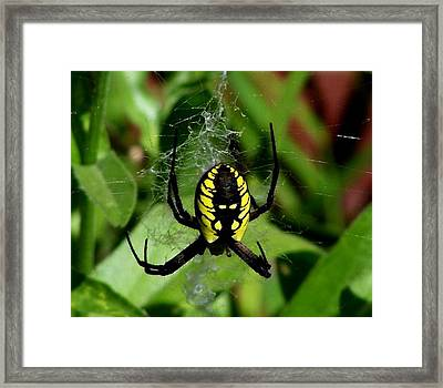 Framed Print featuring the photograph Waiting by Erica Hanel