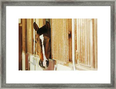 Waiting For A Ride Framed Print by Jill Reger