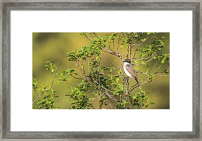 Framed Print featuring the photograph Waiting For A Victim by Onyonet  Photo Studios