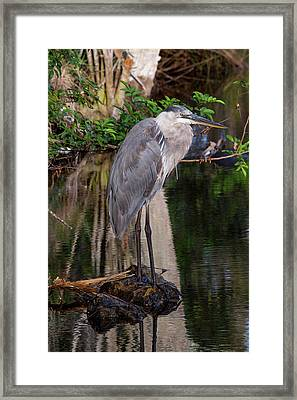 Waiting For Breakfast Framed Print