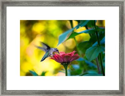Waiting For Butterflies Framed Print