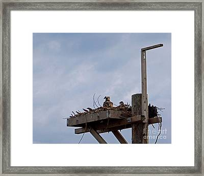 Waiting For Father Framed Print