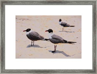 Framed Print featuring the photograph Waiting For Handouts by Jan Amiss Photography