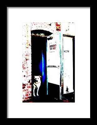 Maltese Dog Christmas Cards Framed Prints