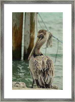 Waiting For Lunch Framed Print by Maria Suhr