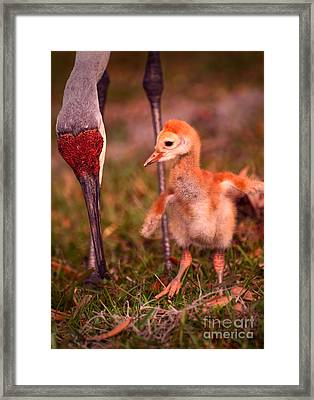 Waiting For Lunch Framed Print by Zina Stromberg