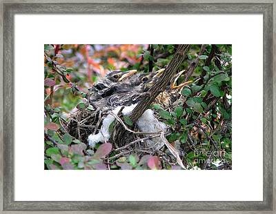 Waiting For Mama Framed Print