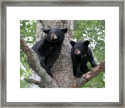 Waiting For Mom Framed Print by Gerry Sibell