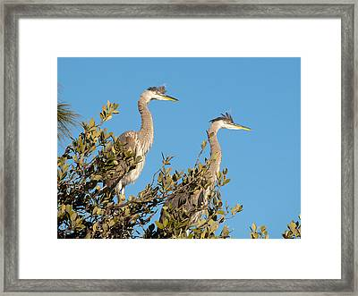 Waiting For Mother Framed Print by Phil Stone
