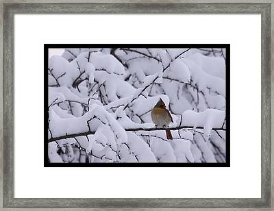 Framed Print featuring the photograph Waiting For Mr. C by Shari Jardina