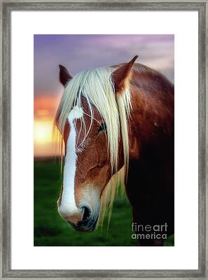 Waiting For My Master Framed Print by Tamyra Ayles