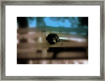 Framed Print featuring the photograph Waiting For My Pop by Sherri  Of Palm Springs