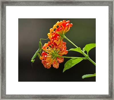 Waiting For Prey Framed Print by Louise Heusinkveld