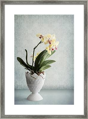 Waiting For Spring Framed Print by Maggie Terlecki