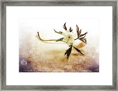 Waiting For Spring Framed Print by Randi Grace Nilsberg
