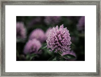 Waiting For Summer Framed Print by Miguel Winterpacht