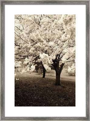 Waiting For Sunday - Holmdel Park Framed Print