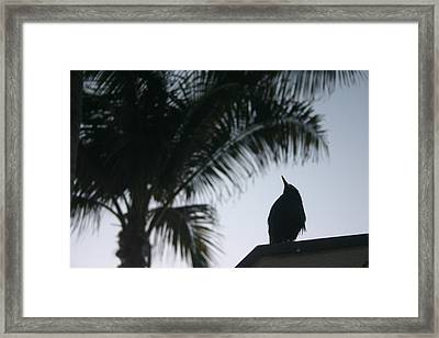 Waiting For Sunrise Framed Print by Dennis Curry