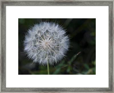 Waiting For The Breeze Framed Print