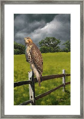 Waiting For The Storm - Red Tail Hawk Framed Print