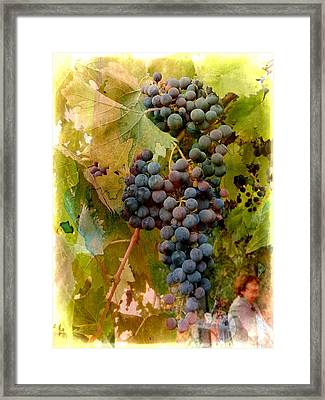 Waiting For Wine Framed Print