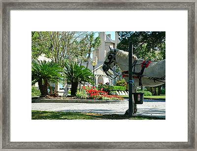Waiting Horse Framed Print by Bruce Gourley