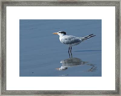 Waiting In The Surf Framed Print