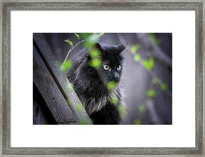 Waiting In The Wing Framed Print
