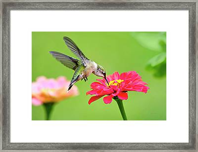 Framed Print featuring the photograph Waiting In The Wings by Christina Rollo