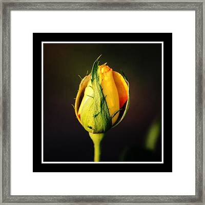 Waiting On A Visitor Framed Print by KayeCee Spain