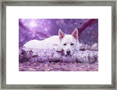 Waiting Or Napping Framed Print