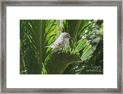 Waiting Or Thinking Framed Print by Debby Pueschel