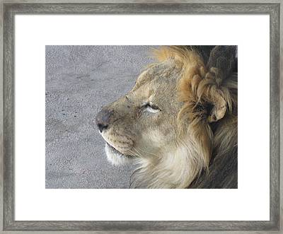 Framed Print featuring the photograph Waiting by Tammy Sutherland