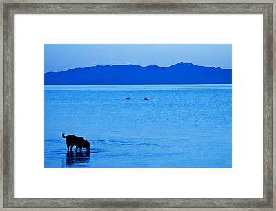 Waiting The Coming Day Framed Print