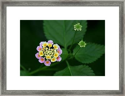 Framed Print featuring the photograph Waiting Their Turn by Shari Jardina
