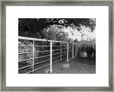 Waiting Their Turn Framed Print by Toni Hopper