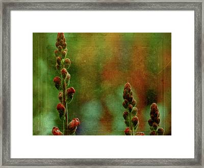 Waiting To Bloom Framed Print by Bonnie Bruno