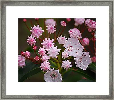 Waiting To Burst Framed Print by Randy Bodkins