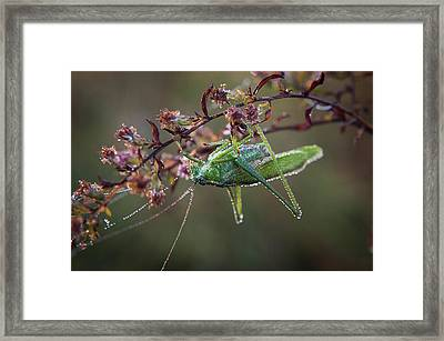Framed Print featuring the photograph Waiting To Dry by Monte Stevens